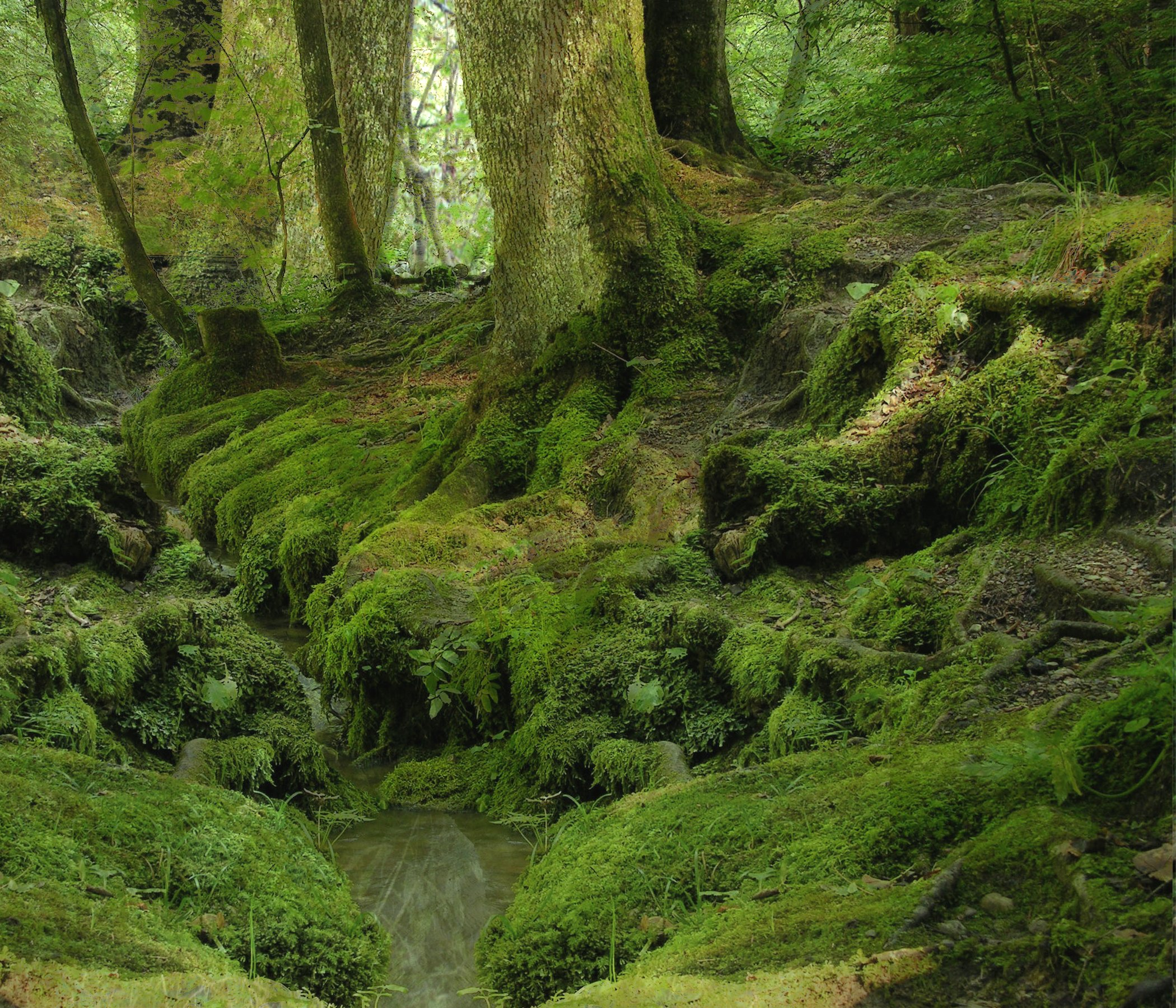 FOREST_BACKGROUND_by_mysticmorning.jpg